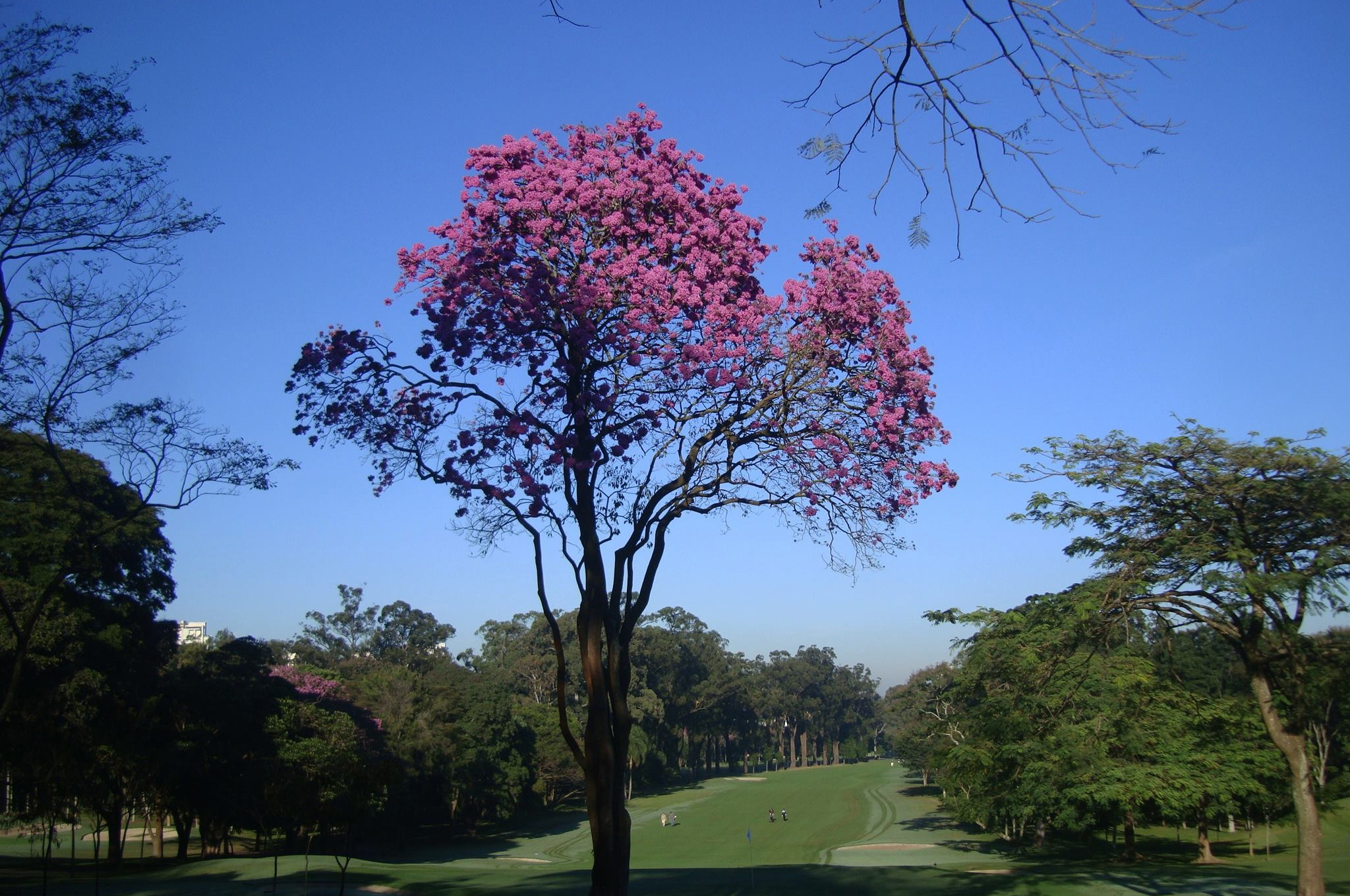 Inscrições abertas para o 73º Aberto do São Paulo Golf Club
